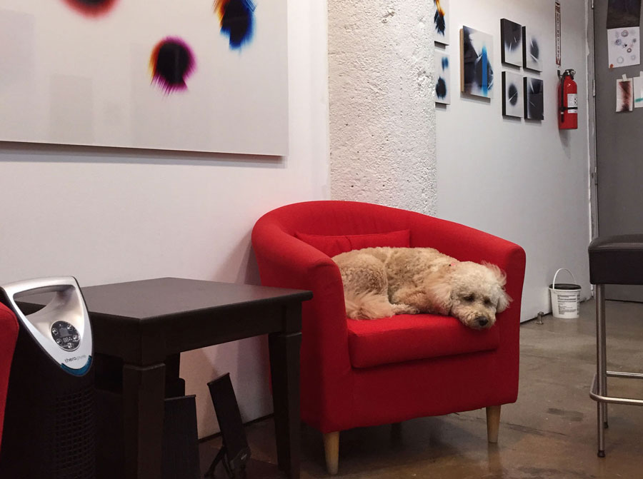 Art studio assistant sleeping on the job - Labradoodle Style