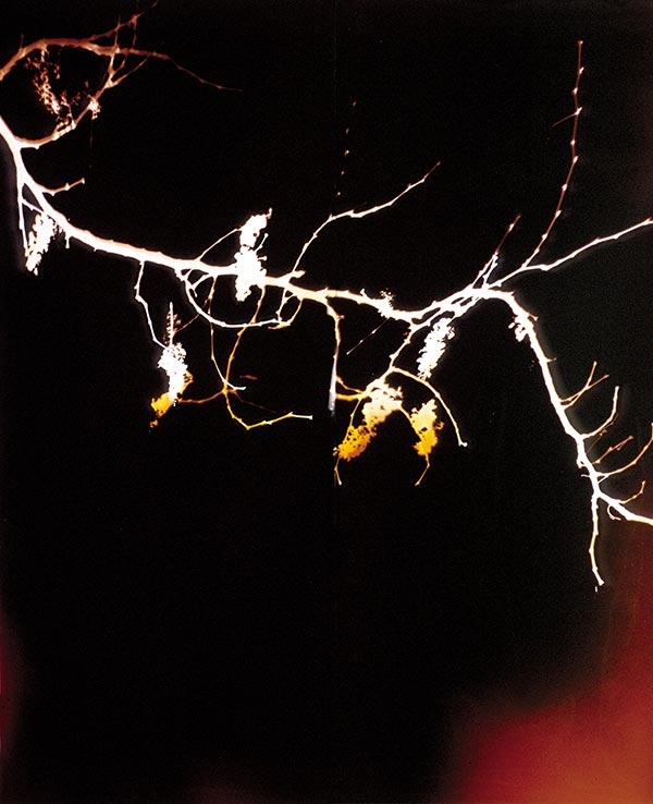 Ripens On Its Own, © 1994, 78 x 60 inches, Chromogenic Photogram