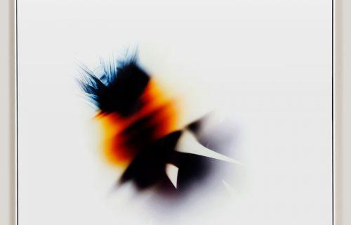minimalist color photogram titled; Self Organized by artist Richard Slechta