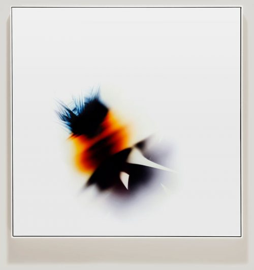 minimalist color photogram titled; Self Organized by artist Richard Slechta