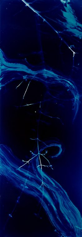 color photogram titled: Snatches Away Everything, by artist Richard Slechta